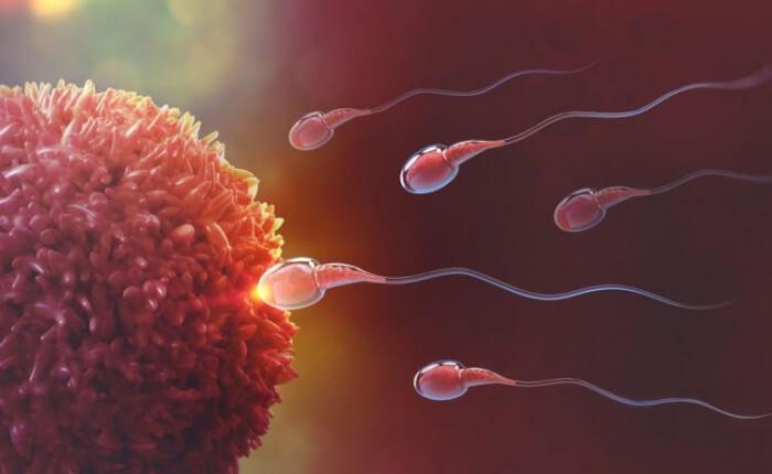 Top #8 Dấu hiệu nhận biết trứng gặp tinh trùng thành công